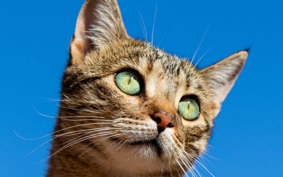 7 wyjątkowych ras kotów